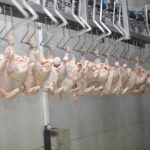 Automation in poultry processing