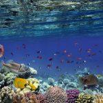 Underwater Video Monitoring