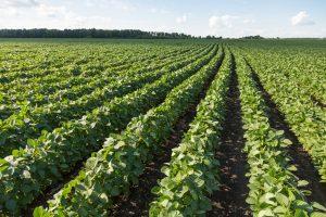La predicción de rendimientos de cultivos con Lentes de visión artificial