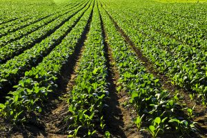 Machine Vision In The Agri-Food Industry