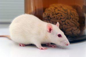 Mouse Brain & Neurons